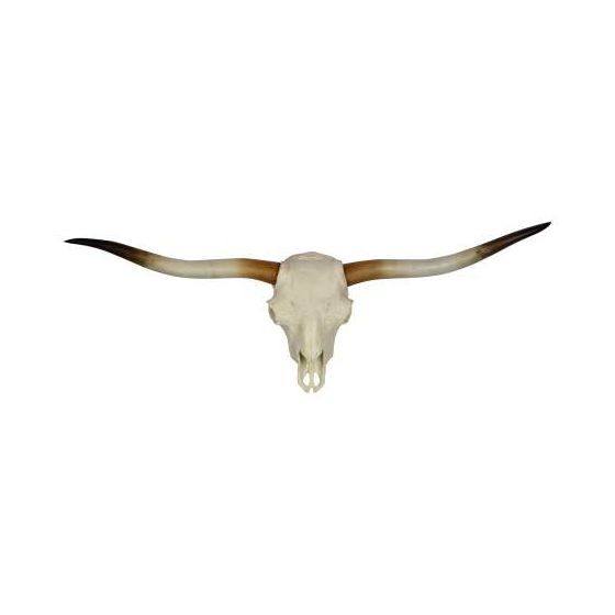Palmer in White Skull & Natural Finish Horns